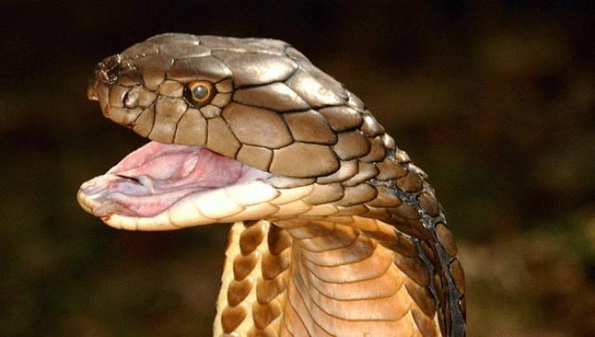 Giải mã giấc mơ thấy rắn trong mộng