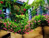 Gia chủ có nên trồng cây dây leo trước nhà?