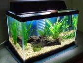 Đặt bể cá trong phòng khách như nào để hợp phong thủy