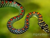 Mơ thấy rắn là điềm gì? tốt hay xấu, đánh con nào?