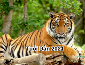Tử vi năm 2021 tuổi Dần