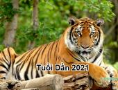 Tử vi 2021 của tuổi Dần