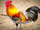 Tử vi năm 2021 tuổi Dậu