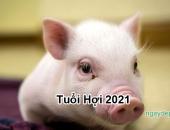 Tử vi năm 2021 tuổi Hợi