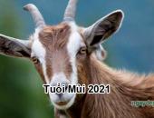 Tử vi 2021 của tuổi Mùi