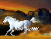 Tử vi 2021 của tuổi Ngọ
