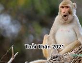 Tử vi 2021 của tuổi Thân