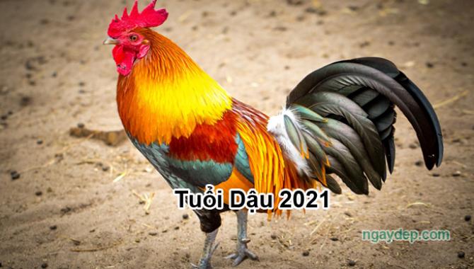 Tử vi 2021 của tuổi Dậu