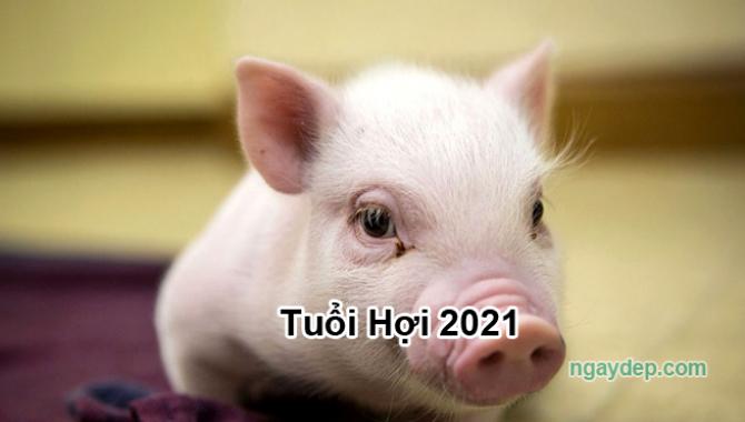 Tử vi 2021 của tuổi Hợi