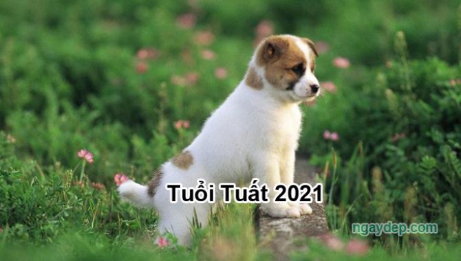 Tử vi 2021 của tuổi Tuất