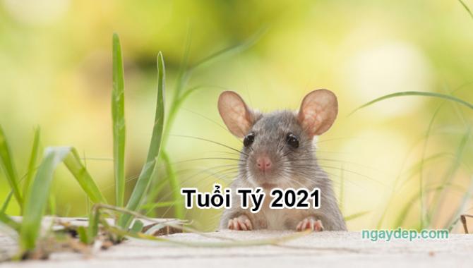 Tử vi 2021 của tuổi Tý
