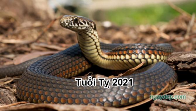 Tử vi 2021 của tuổi Tỵ